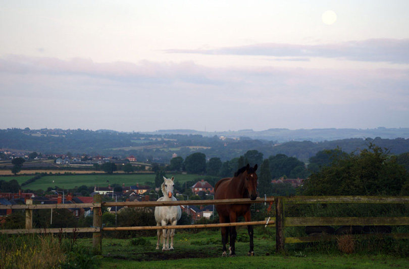 Horses and the moon